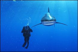 Brian Skerry shark photo